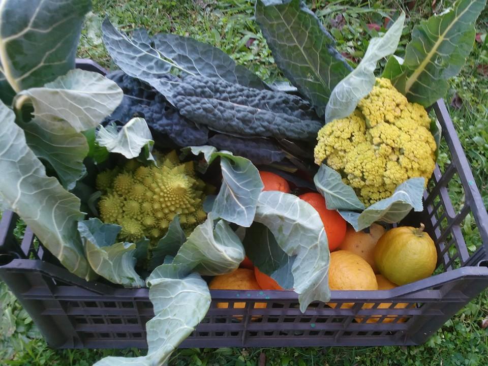 Ecco la Verdura che viene dall'orto sinergico della Fattoria Didattica Asino chi Legge